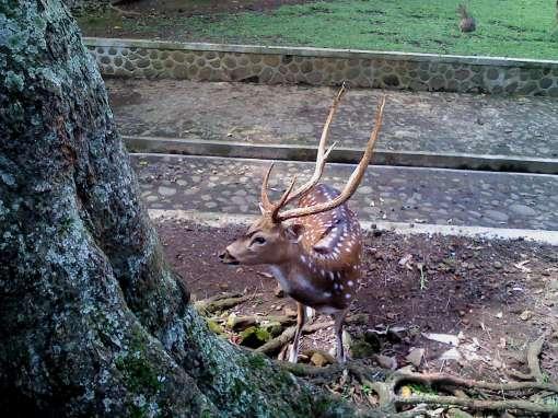 ini namanya rusa. lucu ya.  hehe.